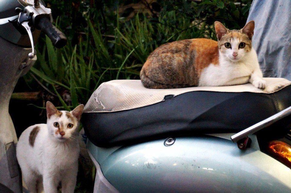 險路沿途都是貓咪的棲息地。(攝影/林郁姍)