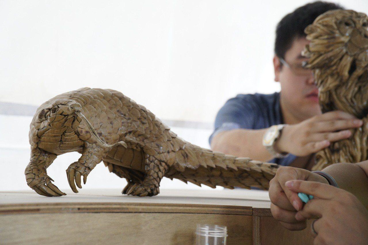 珠宏透過鍾凱翔的瓦楞紙創作,帶大家一起了解野生動物在台灣的生活處境。(挺挺動物應...