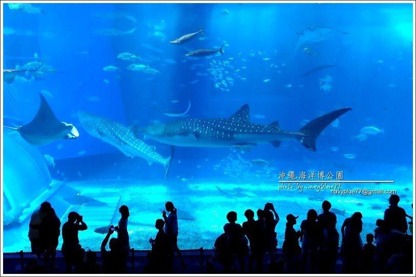 ↑去海洋博公園通常會先去美麗海水族館。