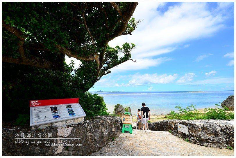 ↑距離水族館與海豚劇場最近的,就是烏龜海濱。