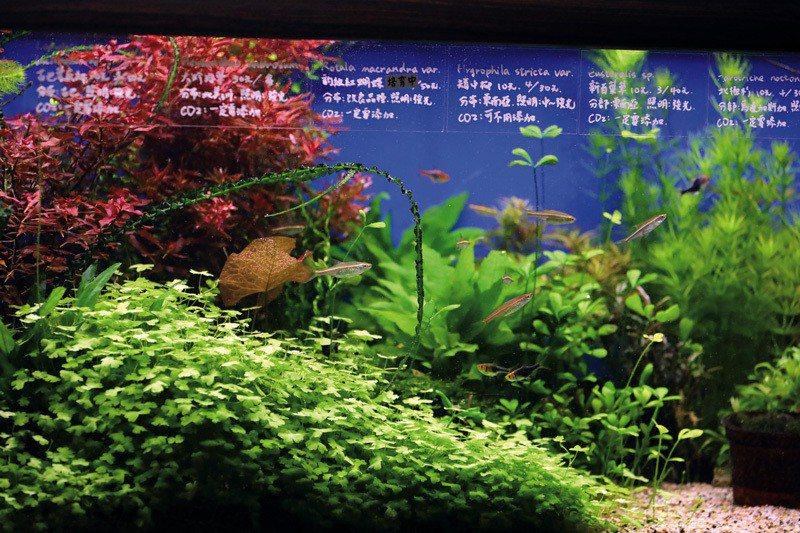 不同的魚種、草種,都有不同的專業知識。哲園水族設計老闆張榮哲認為,店家應該發展各...