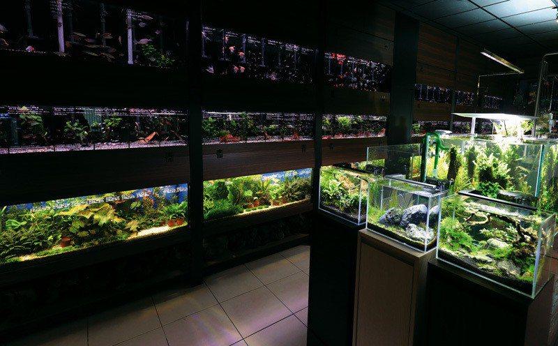 由於都市生活空間狹窄,加上觀賞魚品種日漸多元,因而帶動小型缸潮流。