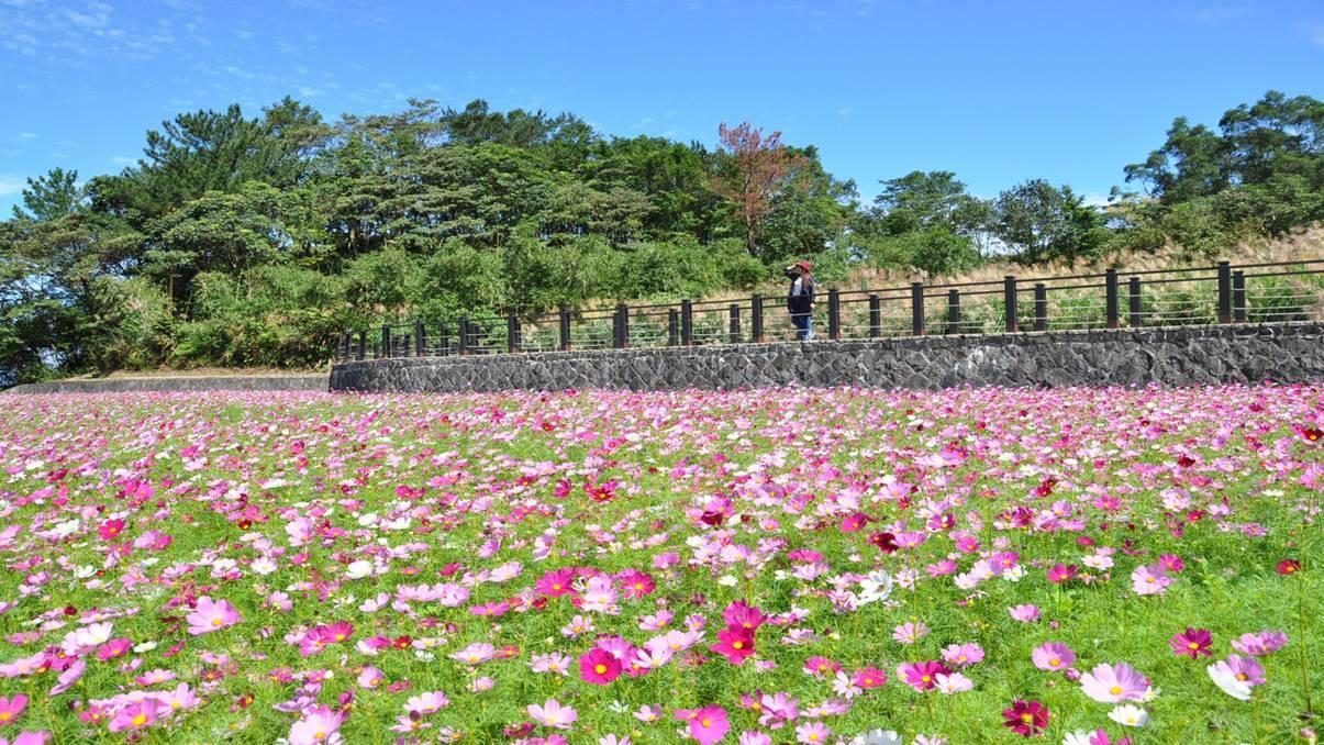 覆鼎金遷葬後的黃土坡,今年春節將變成20公頃浪漫花海。圖/高市府提供
