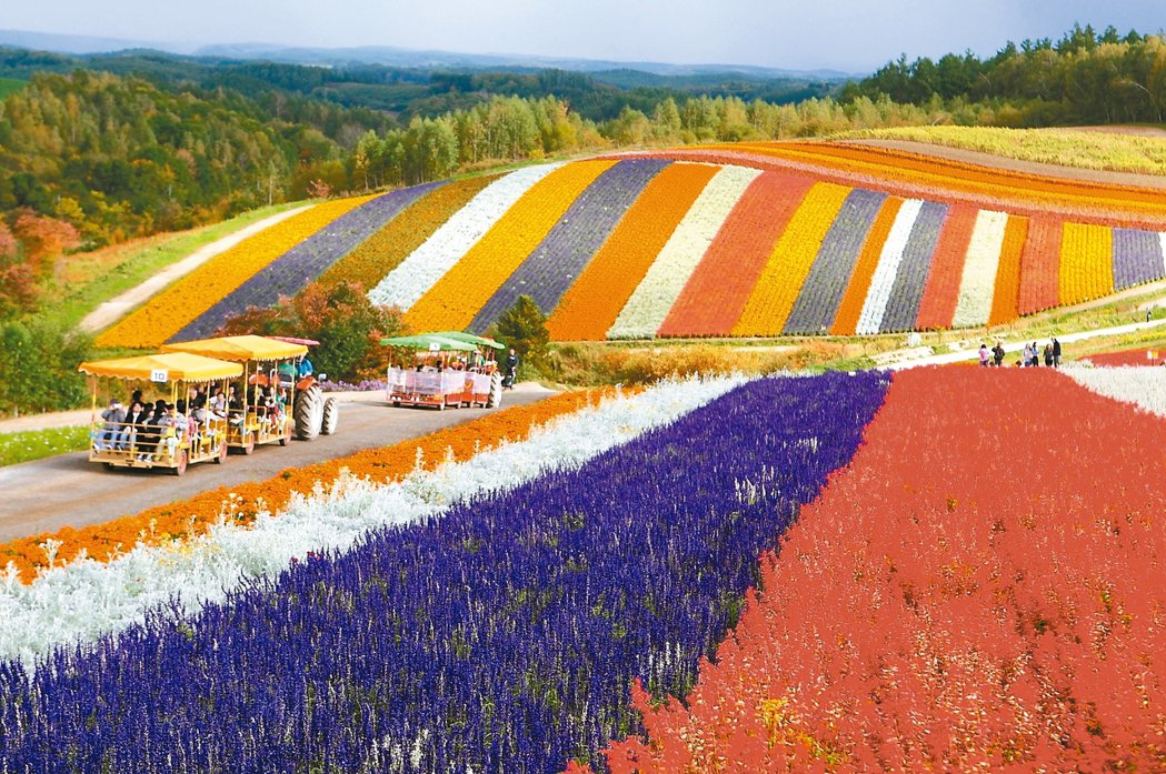 花海在丘陵上整齊排列,彷彿多色彩虹。 記者陳睿中/攝影