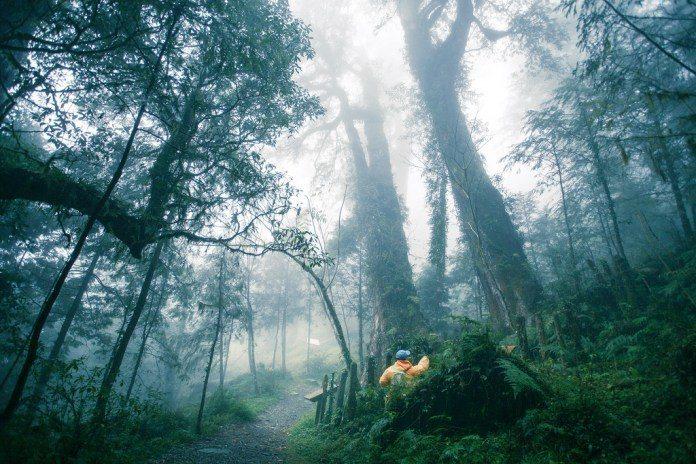 宜蘭棲蘭神木園區。(圖/攝影者Jminghou, Flickr CC Licen...