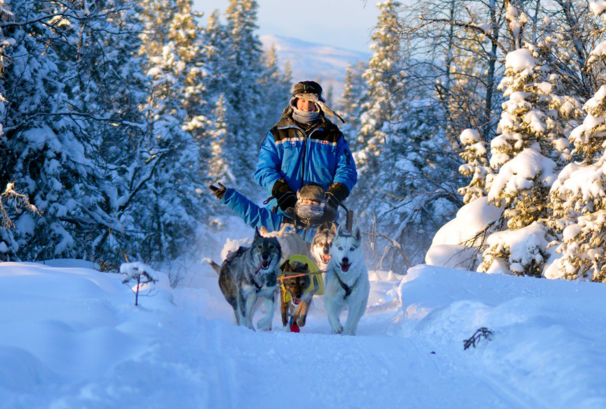 狗雪橇穿越冰樹枝隧道,這根本是童話故事中場景。
