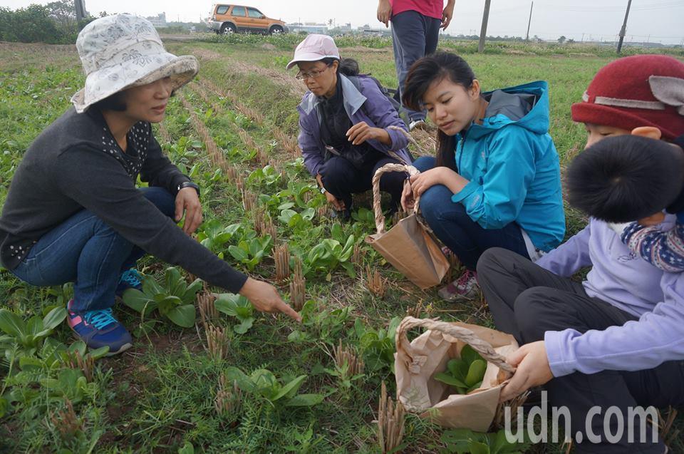 採集友善農地長出的無毒蔬菜和野菜。記者謝恩得/攝影