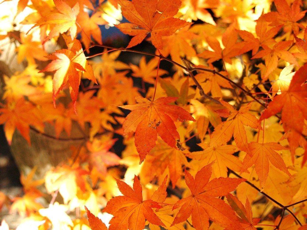秋色為大地上妝,美景就在此刻。圖/綠生活提供