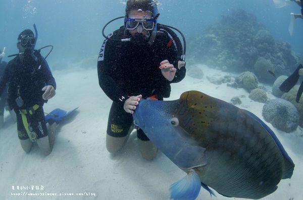大堡礁海底之美,超級推薦。