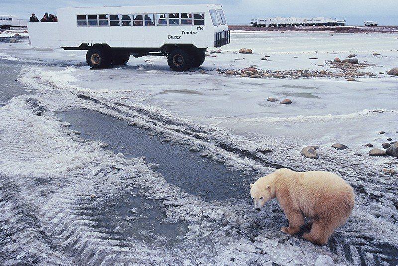 凍原車可駛上凍原而不刮傷凍原,因為一旦凍原土受傷,需要好幾年才能恢復。