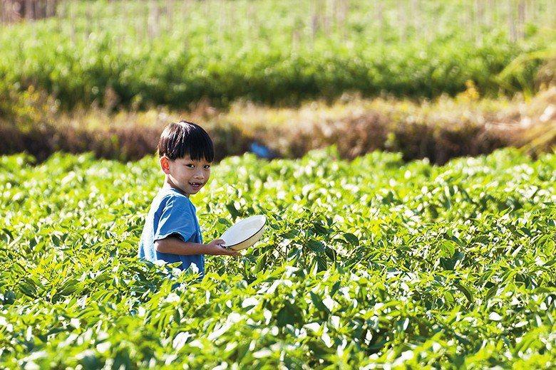 在知識的傳授之外,食育特別注重孩子們親身參與種植的體驗過程。