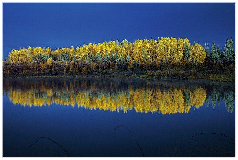 秋日造訪極地,可以捕捉樹林變色,一片金黃。