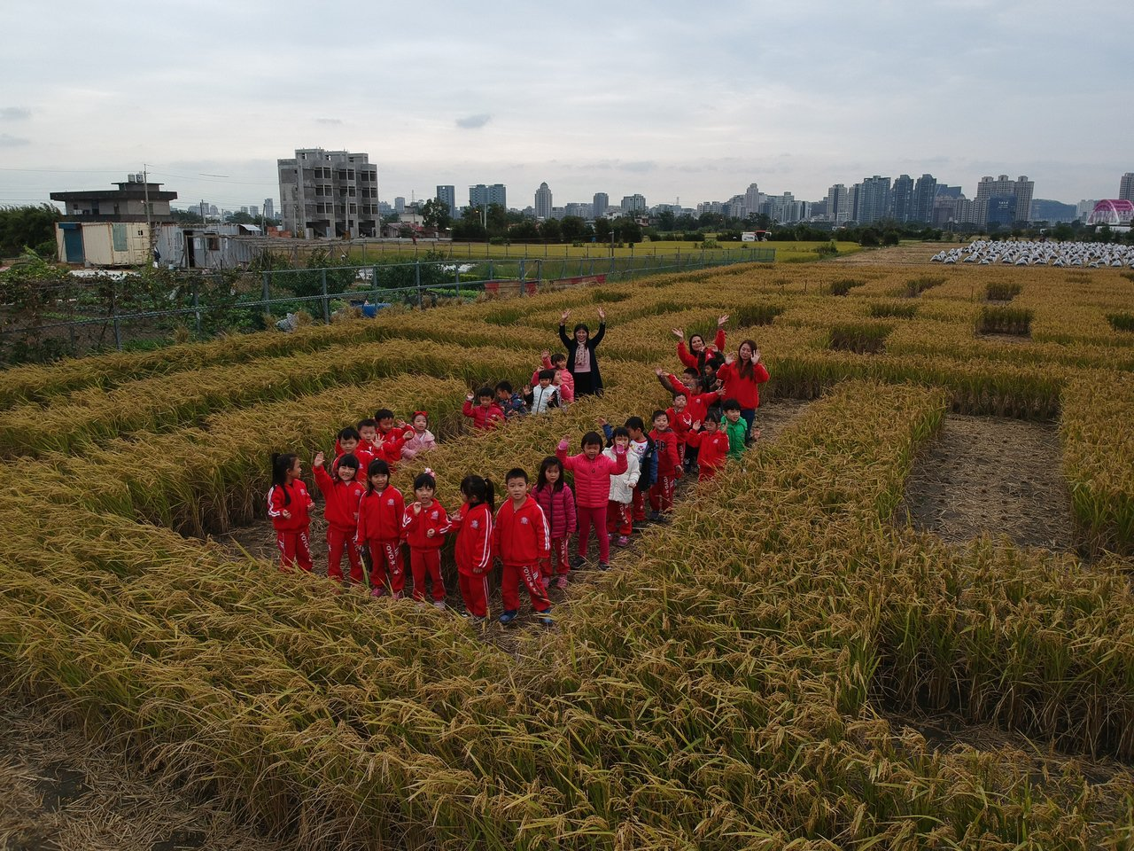 巨型稻田迷宮本周六日登場,大小朋友可以穿梭在稻浪中,體驗捉迷藏。圖/竹東地區農會...