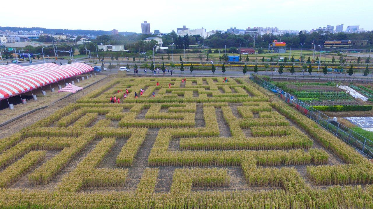 巨型稻田迷宮號稱有600坪面積。圖/竹東地區農會提供