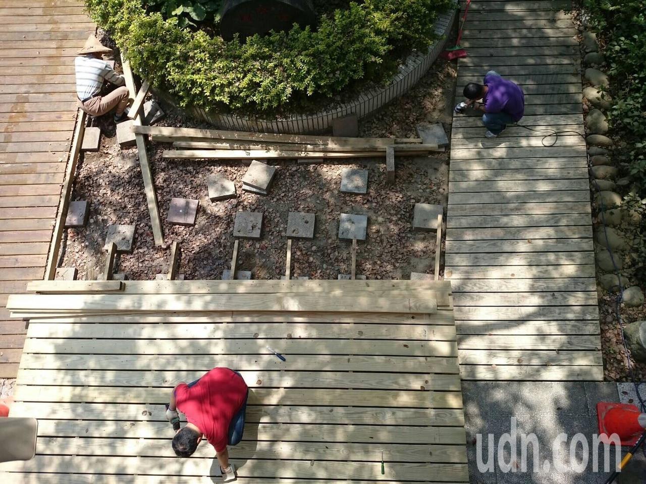 桃園市大溪區內柵國小師生興建木棧道,避免人踩踏到樹根。記者許政榆/翻攝