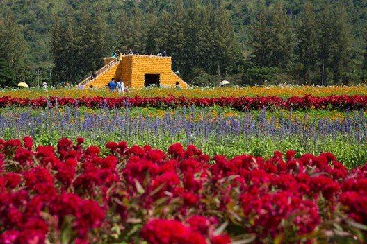 泰國北部清萊府花卉節即將在12月底開跑。圖/泰國觀光局提供