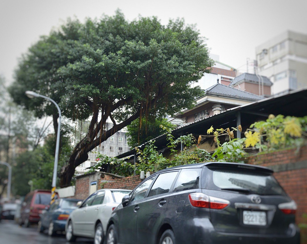 桃園市長鄭文燦今天也前往東國街日式宿舍會勘,他說,這裡同樣「原樣修復,修舊如舊、...