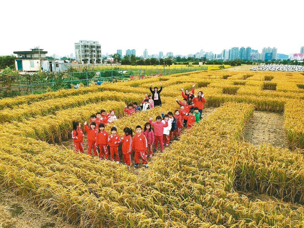 竹東地區農會利用2期稻作收割,打造600坪巨型稻田迷宮,明後2天開放,大小朋友穿...