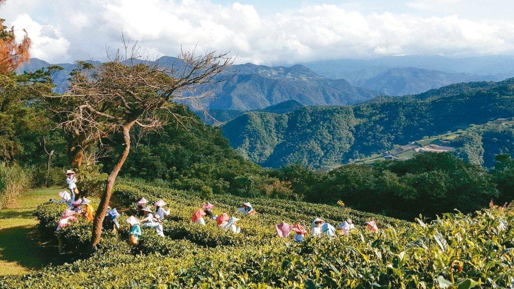 來到坪林區綠光農園,景色優美還能體驗採茶和古法製茶技術。 圖/綠光農園提供