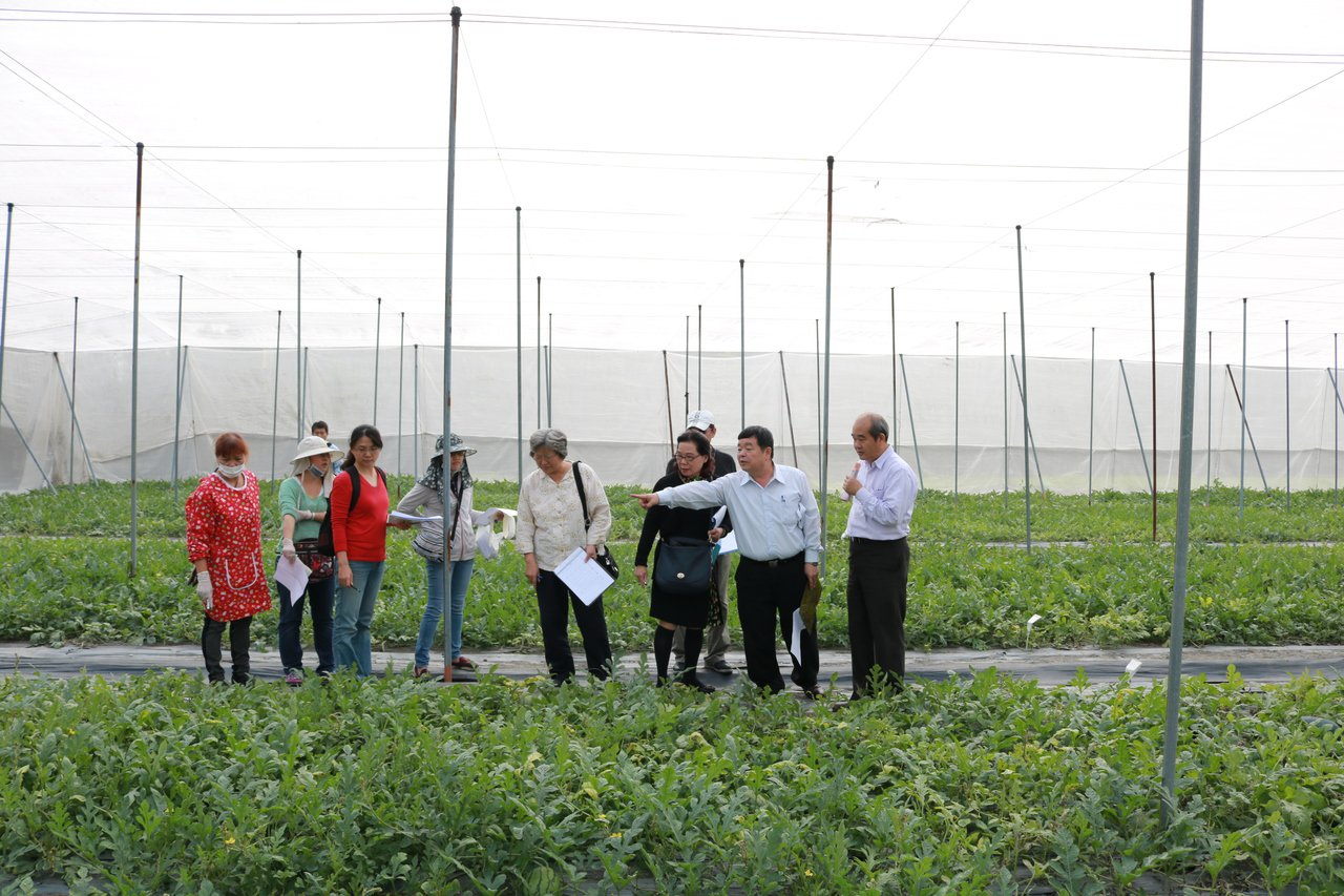 西瓜種苗比賽19日在農委會種苗場舉行。圖/種苗場提供