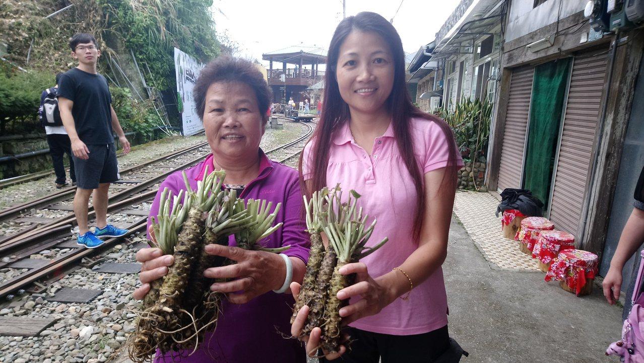 近日山區商家、葵農販售山葵時最常說一句話,「阿里山最後國寶;明年買不到了!」記者...
