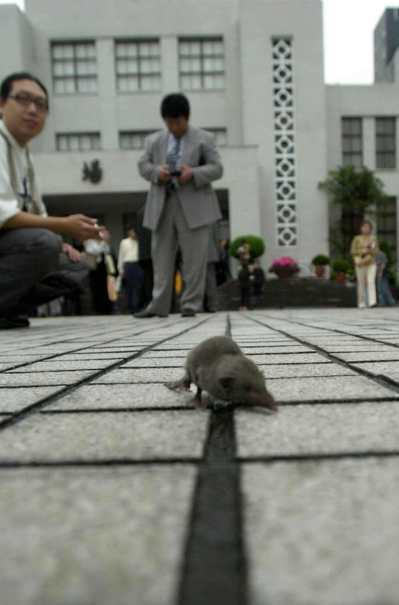 立法院2002年總質詢時,議場外廣場上就出現一隻「錢鼠」逛大街,看到的人驚訝不已...