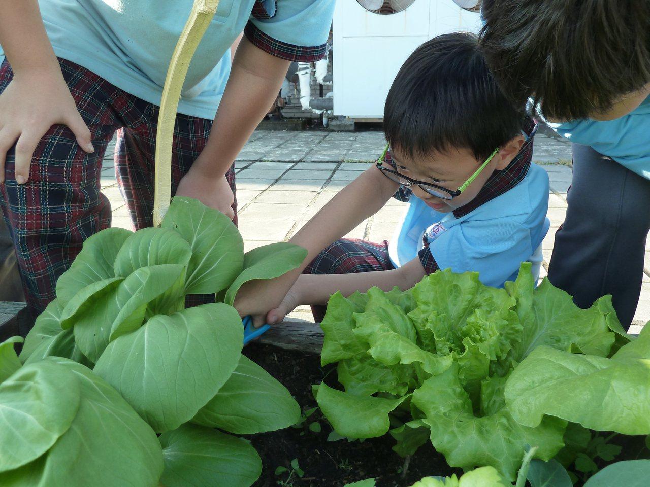 台中市何厝國小位於市區,學校利用頂樓種菜,從幼兒園到小六都參與食農教育,小朋友自...