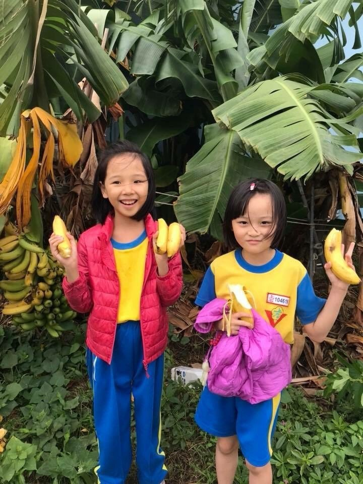 這學期香蕉大豐收,小朋友好開心。圖/上石國小提供