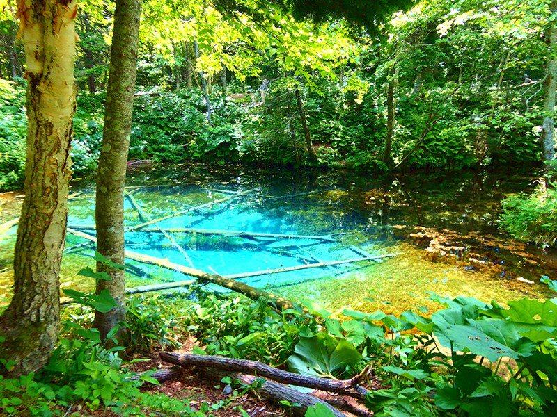 坐落在摩周湖北邊的神之子池水深5公尺,透明度極高,是最近受到矚目的能量景點。