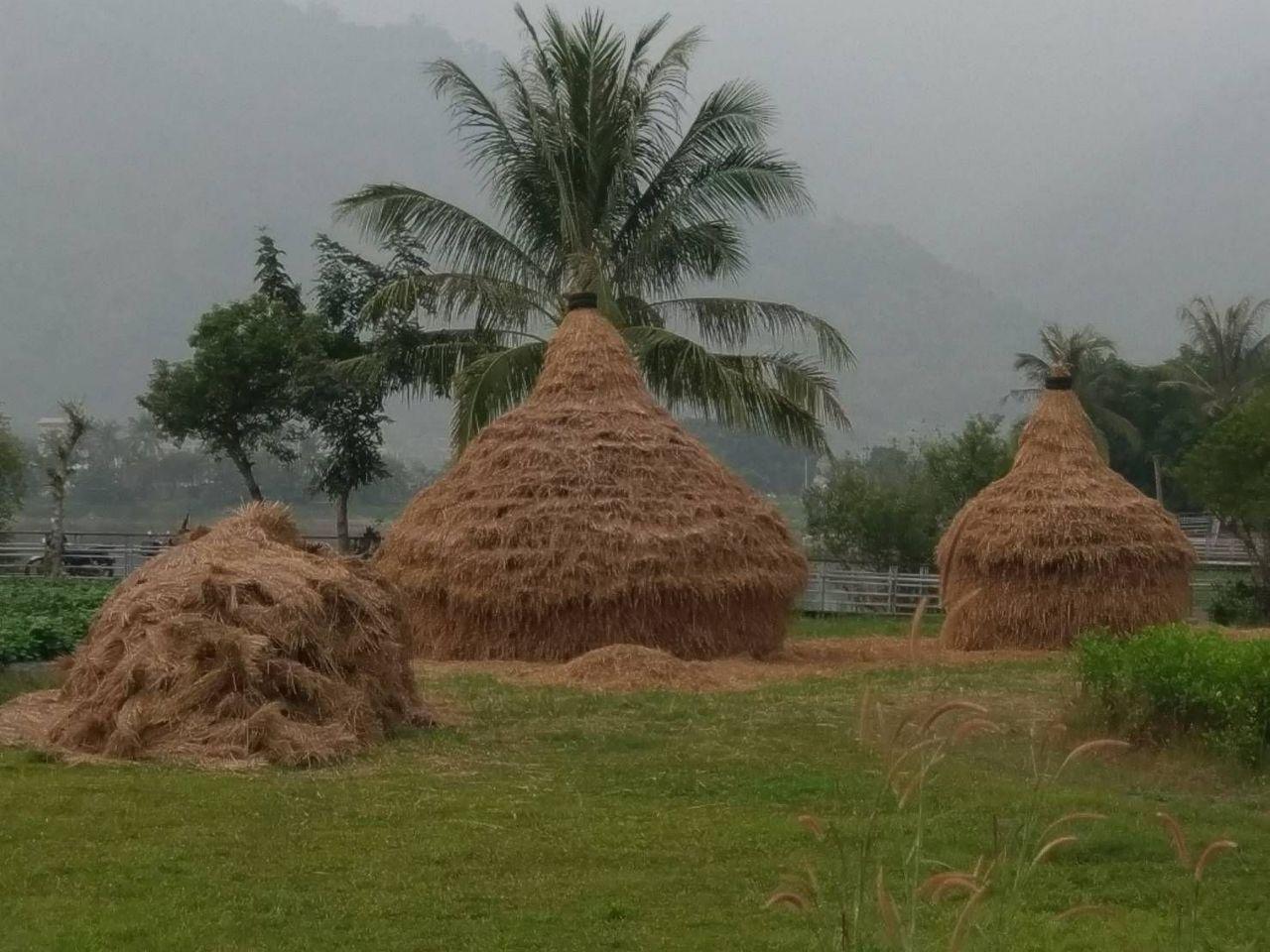 美濃湖畔稻草藝術地景區,展至明年2月20日結束。記者徐白櫻/攝影