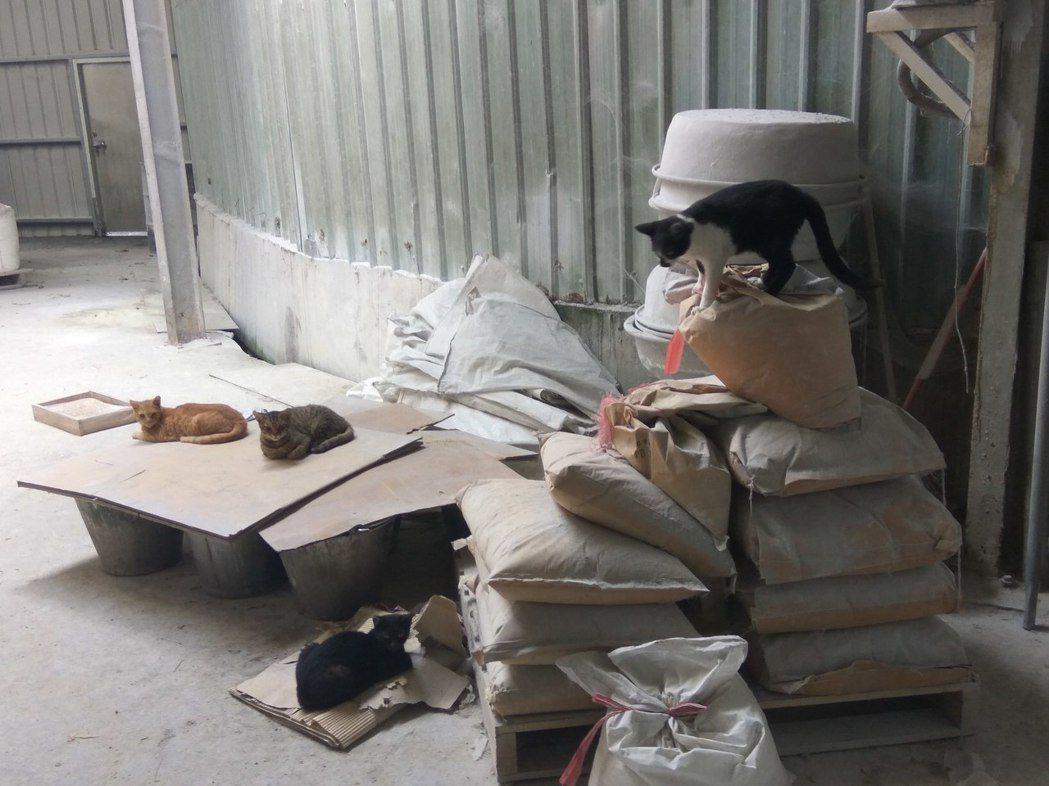 某工廠占地廣闊,廠內有多處題供街貓休憩居住的角落。圖/新北市動保處提供