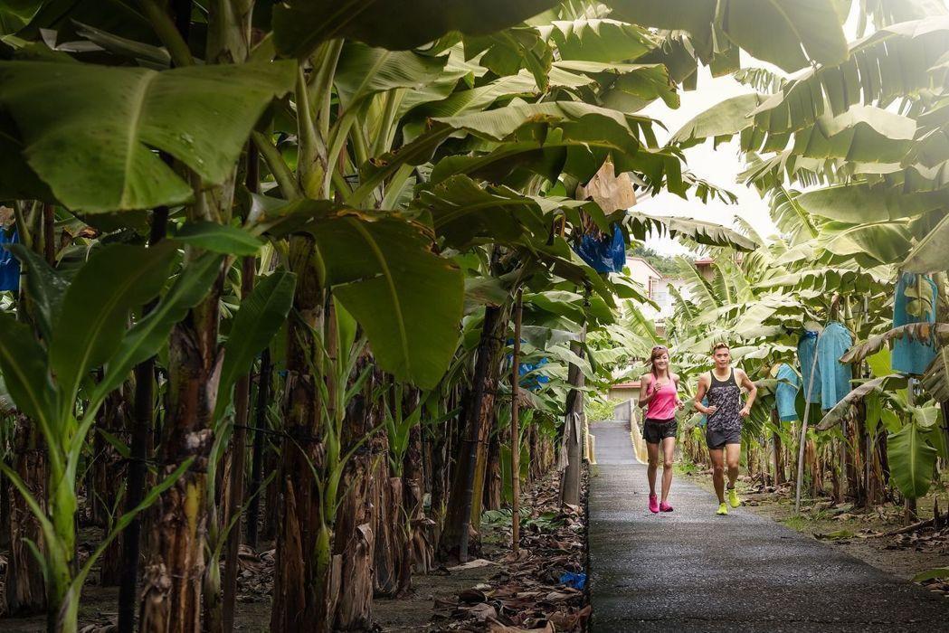 跑進香蕉園!旗山限定賽道。 圖/聯合數位文創