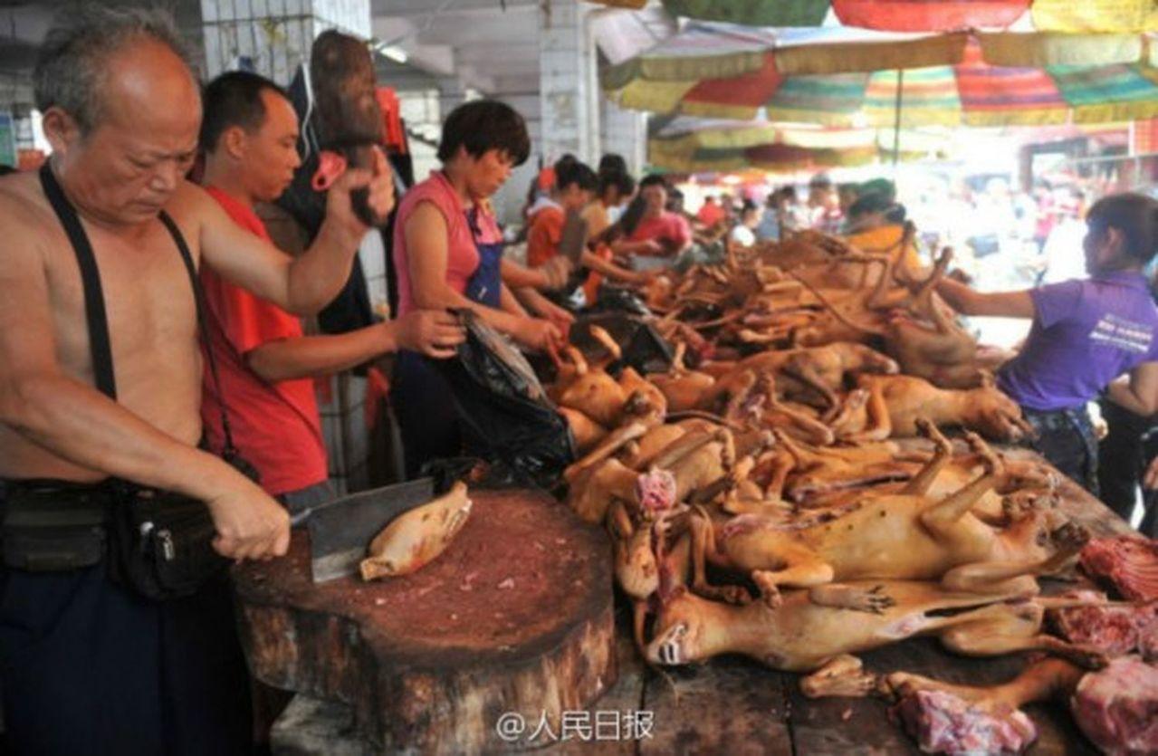 中國執法機關開始關注「有毒狗肉」問題。其中,安徽省警方拘捕8人,嫌疑人涉嫌在中國...