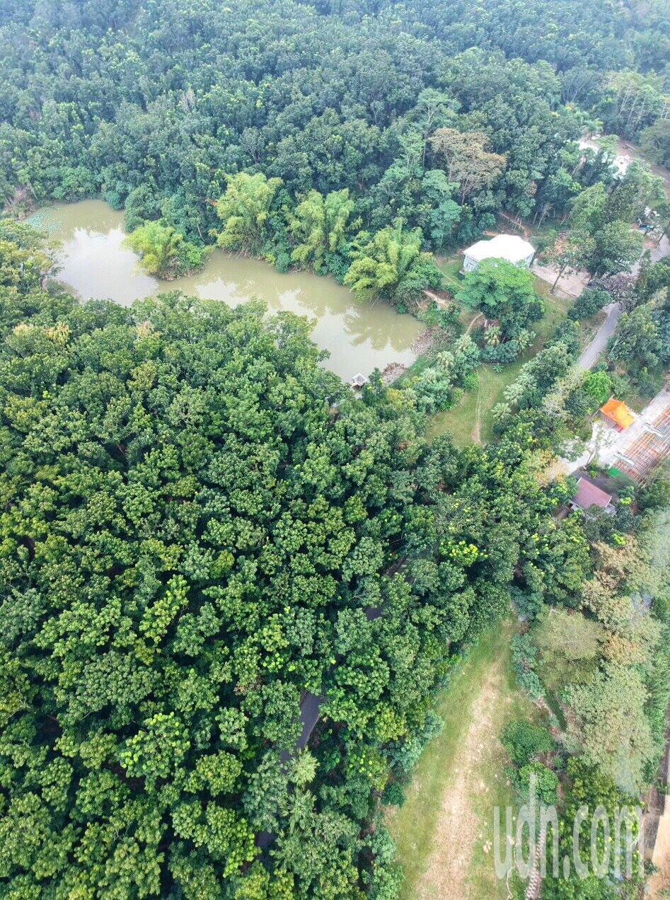 中興大學新化林場從空中鳥瞰270萬棵森林,相當壯觀。記者吳淑玲/攝影