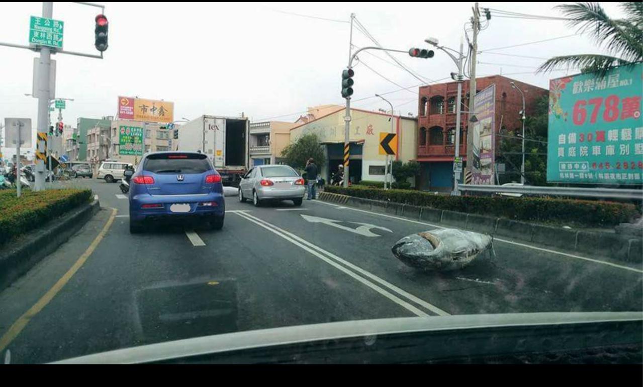 高市林園區沿海路與王公路今中午2尾魚掉落馬路,佔用快車道,有路過網友將照片PO上...