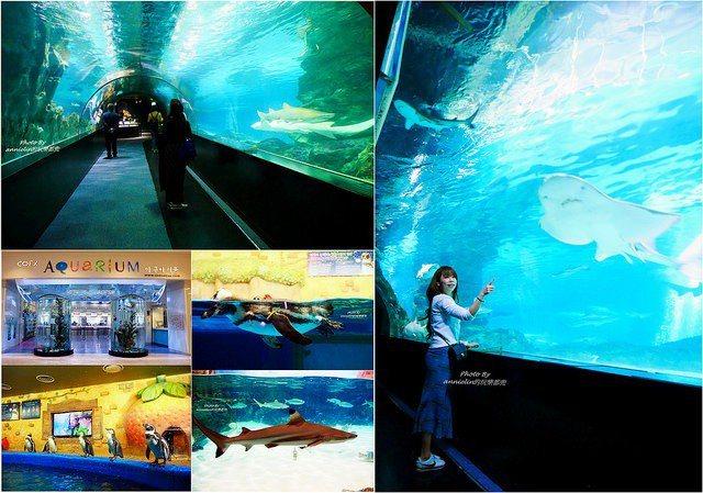 韓國最大室內水族館,韓國最受歡迎的旅遊設施!不只親子同遊很好玩,連情侶也能玩得不...