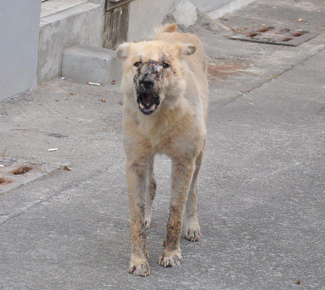 高雄市區驚見「鬼臉狗」!引起附近民眾恐慌,呼吸還會發出恐怖怪聲,常嚇壞夜歸居民。...