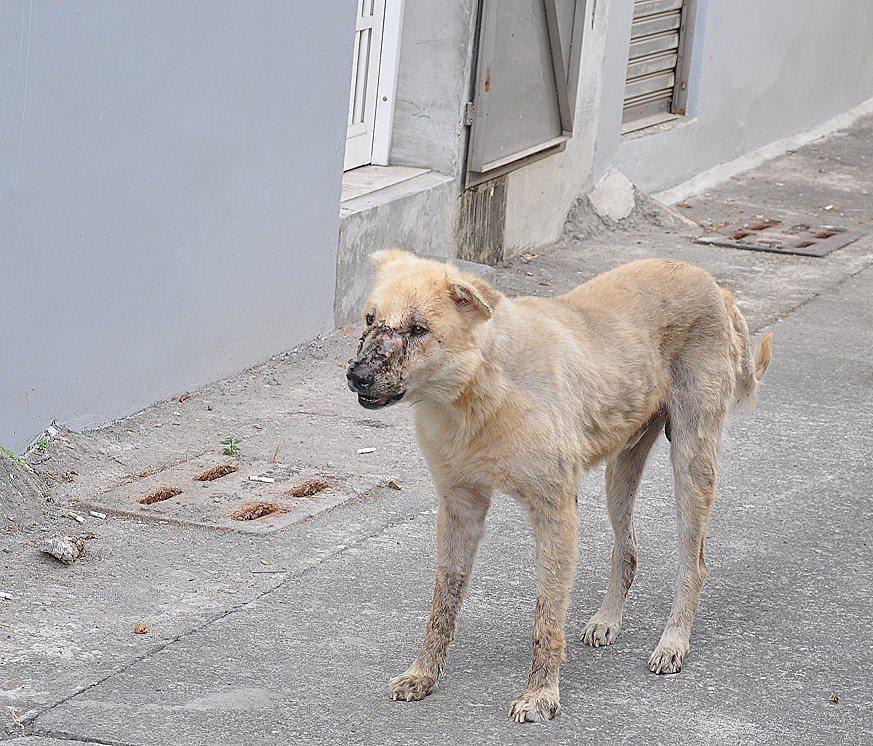 高雄市區驚見「鬼臉狗」!引起附近民眾恐慌,呼吸還有恐怖怪聲,常嚇壞夜歸居民。圖/...