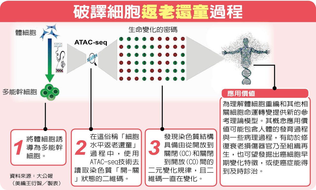 中國破譯細胞「返老還童」密碼。 許予/製表
