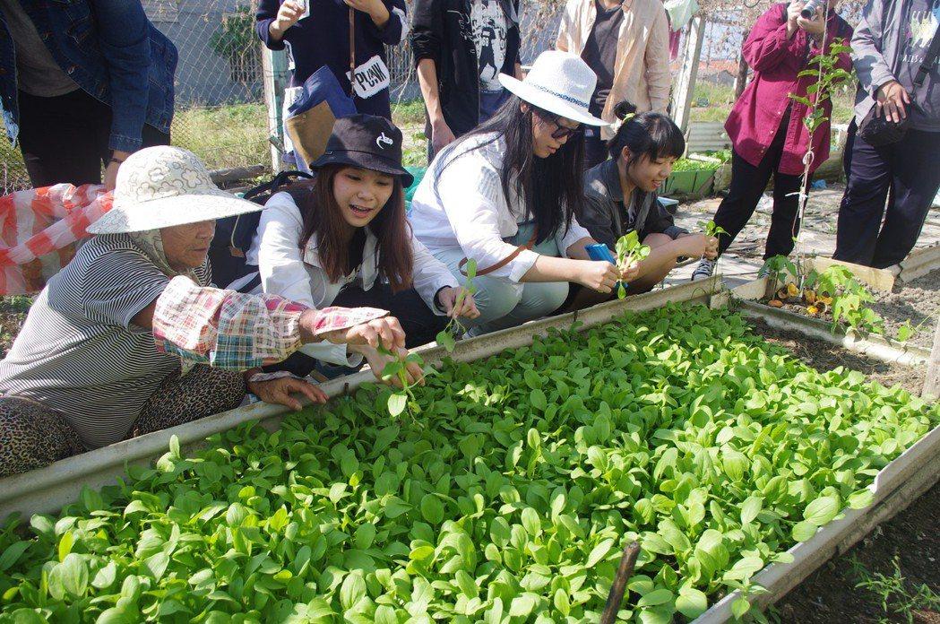 社區大學的課程之一,是帶領民眾到社區阿嬤的菜園,透過認識食材從哪裡來,去關心目前...