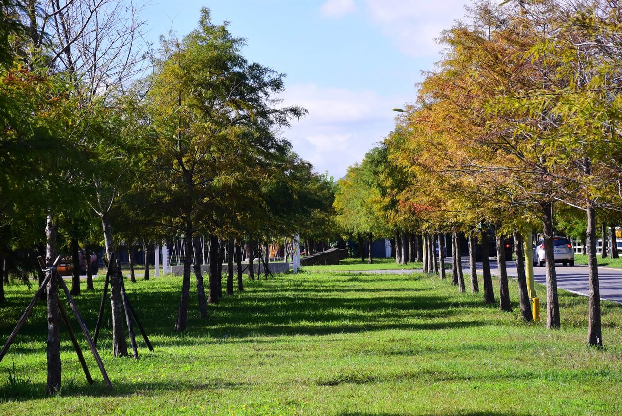 花蓮市國福花海的周邊,有一年四季呈現不同風情的落羽松。圖/市公所提供