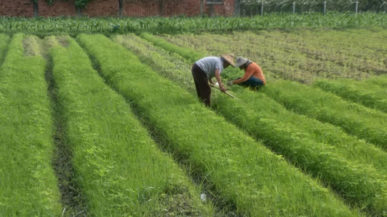 南投縣閒置農地很多,縣府將租下來,便宜租給青農。記者張家樂/攝影