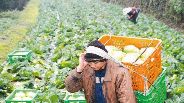 2018年起,作物保險除了高接梨、梨、芒果、釋迦、養殖水產、水稻、芒果之外,新增...