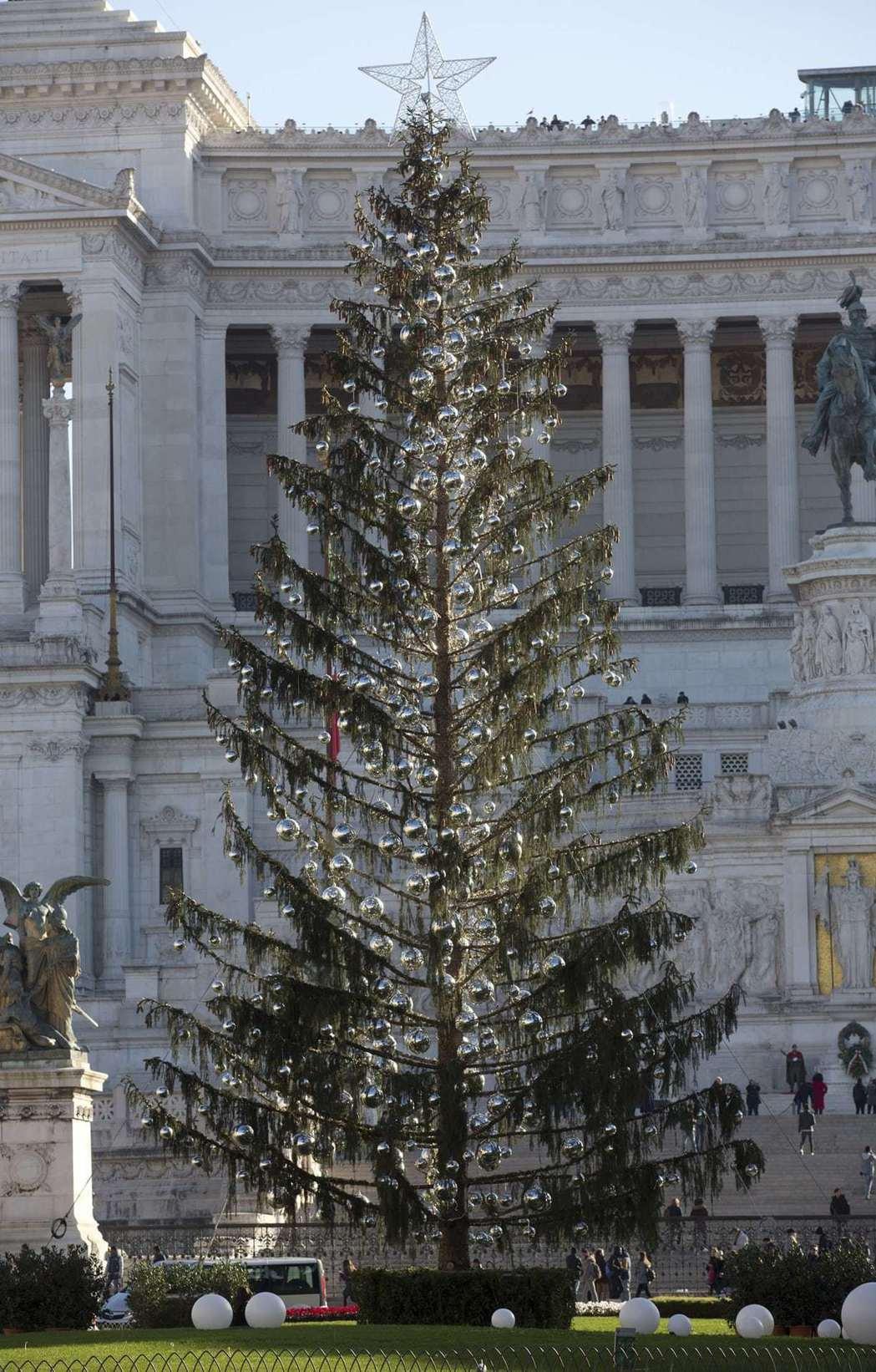 大量落葉且垂死的耶誕樹讓羅馬居民覺得丟臉。美聯社