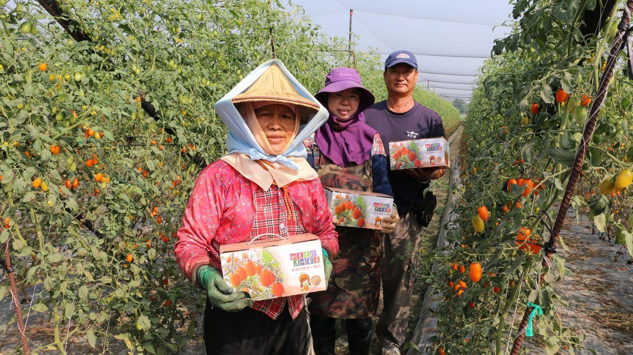 在美濃農會媒介下,在地農民供應品質穩定的番茄給消費者選購。圖/高雄郵局提供