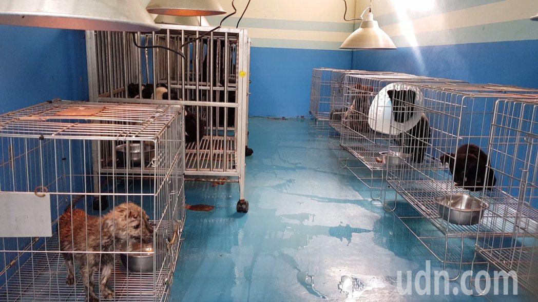 苗栗縣生態保育教育中心收容流浪犬貓,歡迎領養取代購買。記者黃瑞典/攝影