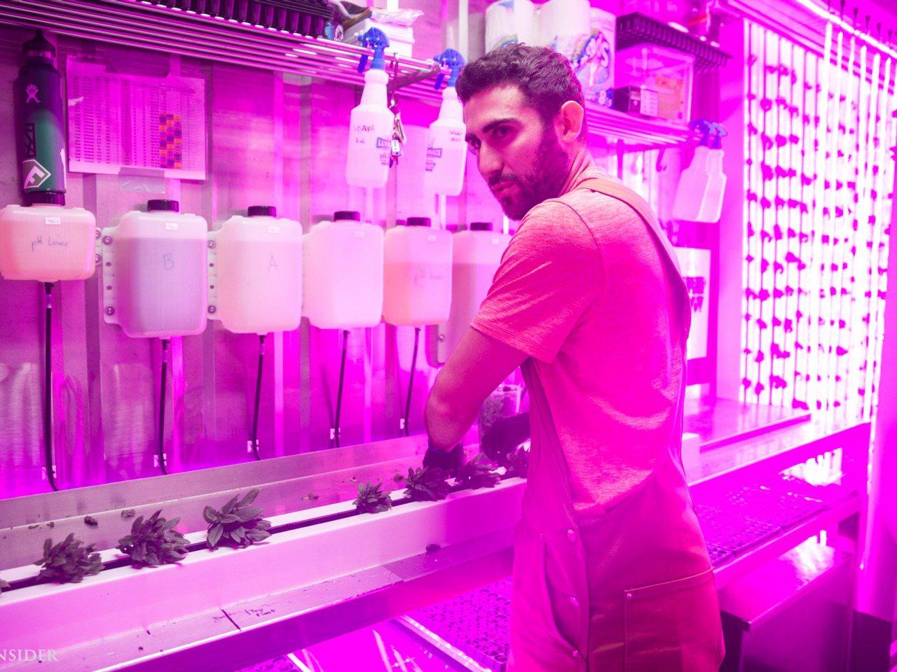 金柏·穆斯克推廣平方根計畫,在紐約的魯克林貨櫃屋培育垂直農場,利用新技術耕種。圖...