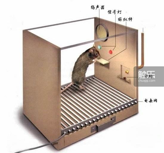 史金納箱實驗裝置圖。