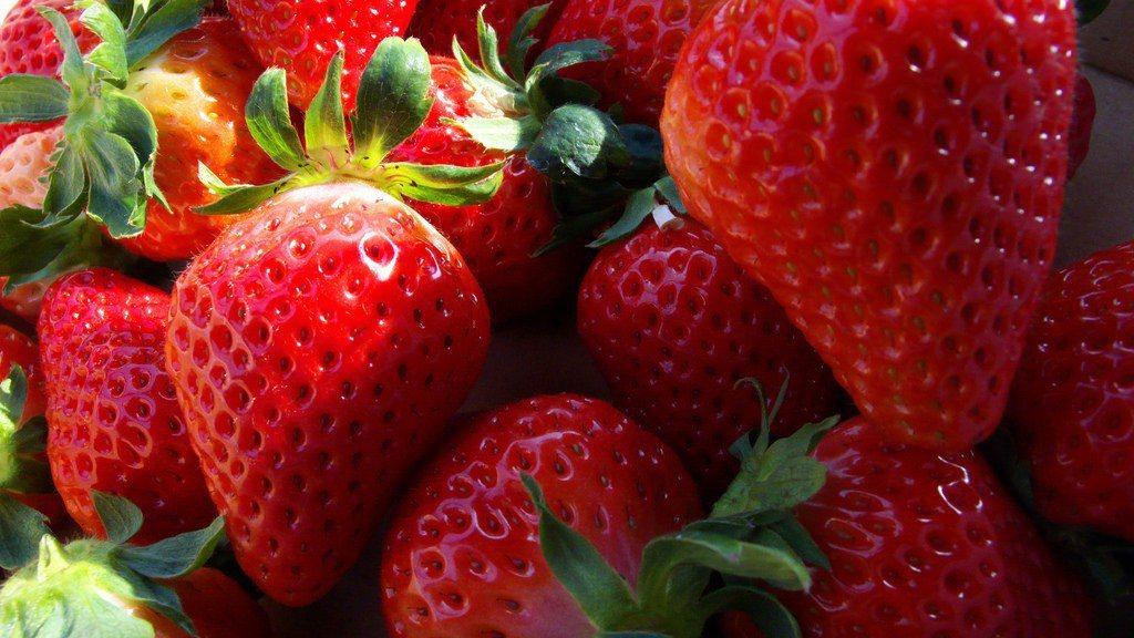 ▲採草莓。(圖/攝影者:yuko, Flickr CC License)