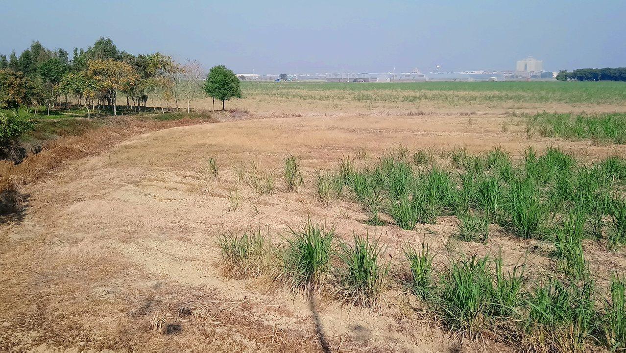 閒置農地揚塵,也是造成空氣品質不佳原因之一。記者卜敏正/攝影